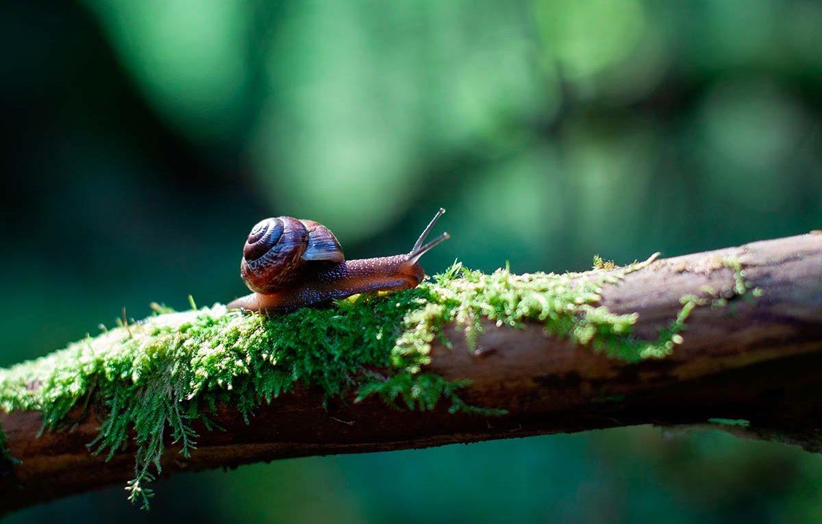 snail on a tree branch